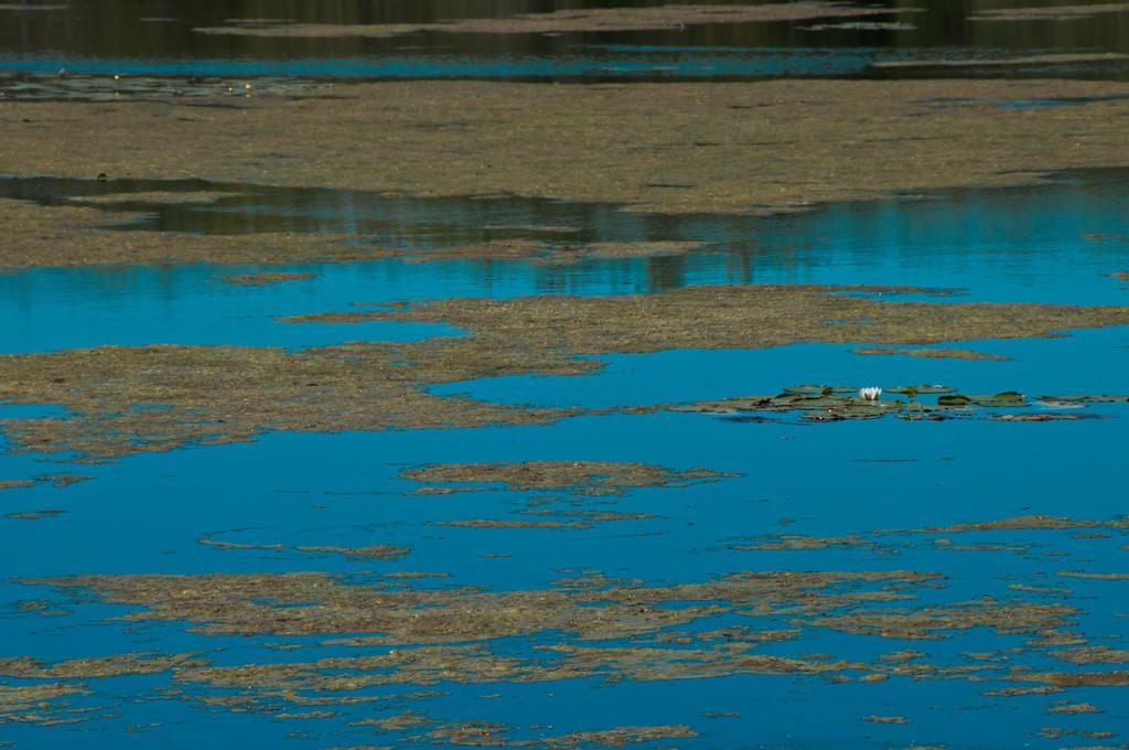 Blue on Water / Le ciel sur terre