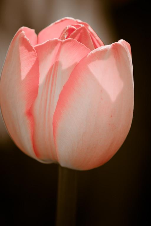 Blush / Délicate