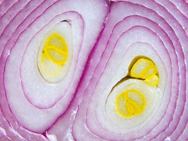 Onion Interior
