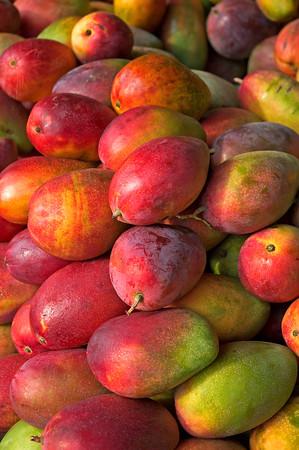 Mango  Madnesss,   Costa Rica