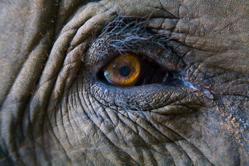 """Eye Contact"" Wildlife Portrait Exhibit"