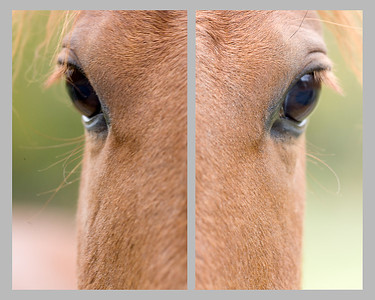 Horse composite.  Left and right halves are different shots.