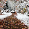 Salted Fall Trails