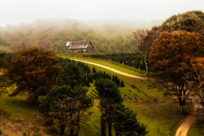 Foggy Autumn Country Road