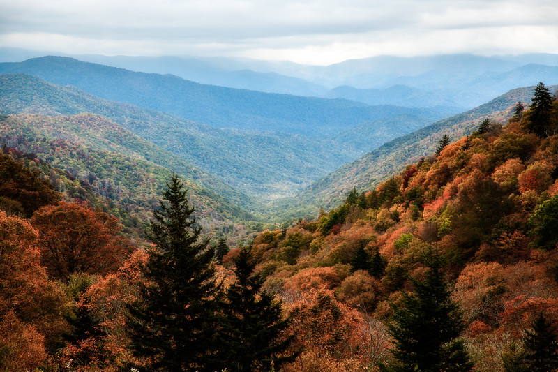 Majestic Autumn Smokies
