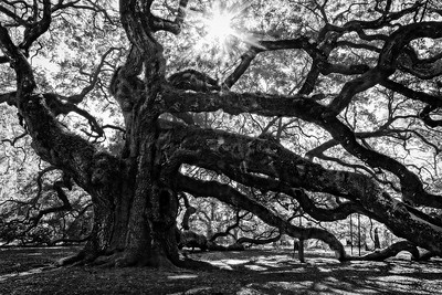 The Angel Oak B&W