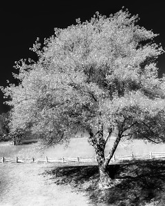 Tree at Peaks of Otter