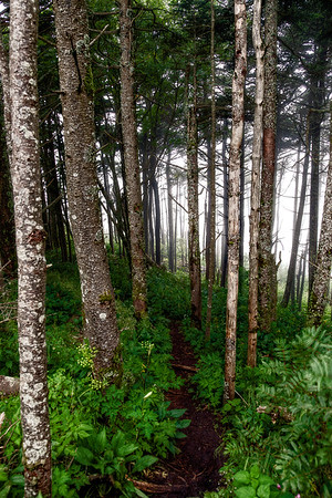 Misty Woods at Mt. Mitchell