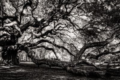 The Angel Oak One Side Black and White