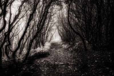 Creepy Trail