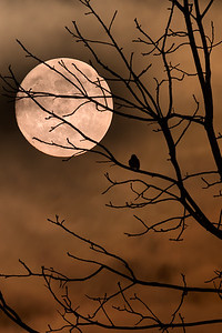 Super Moon & Mr. Bluebird