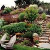hillside-landscape-garden-steps