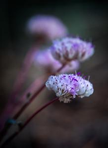 Portrait of FloraRae