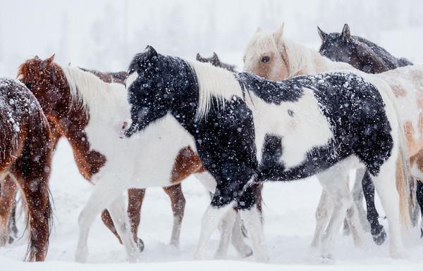 Herd Swing