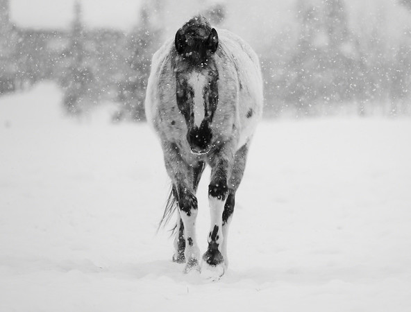 Appy In The Snow