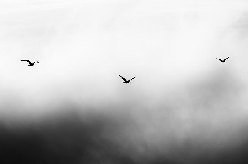 3 Bird High