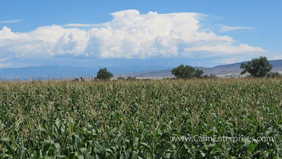 IMG_9099 4x6D Olathe Colorado Sweetcorn Fields