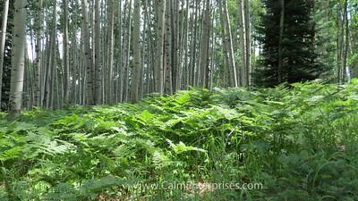 IMG_8845 4x6D West Elk Wilderness