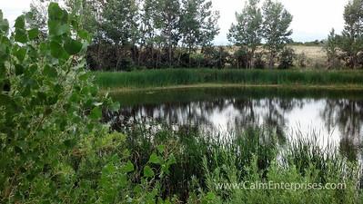 IMG_20130807_094855_023 4x6D Cherry Creek SP Pond off Pope Trail