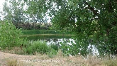 IMG_20130807_095351_394 4x6D Cherry Creek SP Pond off Pope Trail