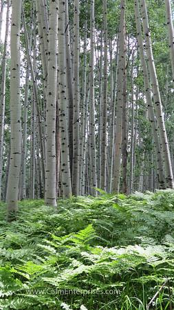 IMG_8846 4x6D West Elk Wilderness