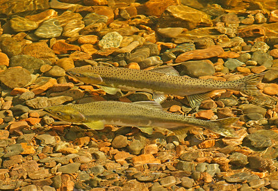 Salmon Cascade River 001