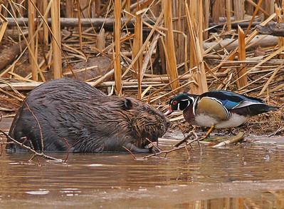 Beaver Pond 007