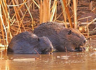 Beaver Pond 001