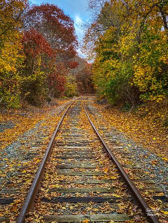 Cape Tracks #2