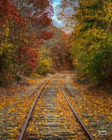Cape Tracks #3