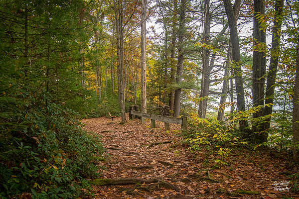 Rim Trail in Colton Point State Park.  10/12/19  ©John Schiller Photography