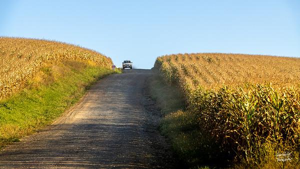 Corn, corn, corn.  10/11/19  ©John Schiller Photography