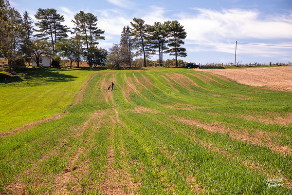 Farm Fields II