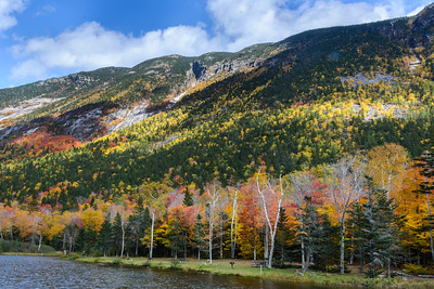 Fall Spender in the White Mountains