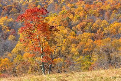 Final Foliage || Sky Meadows State Park, VA