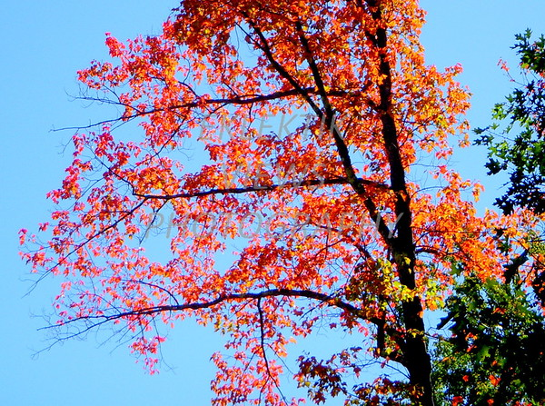 Fall and Bathing in Color