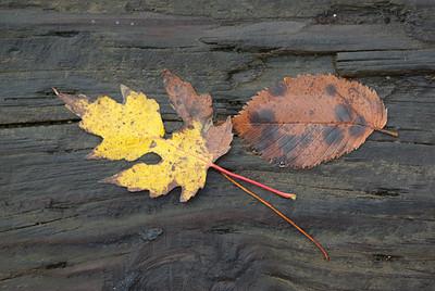 Leaf S1