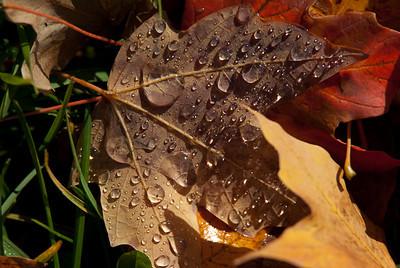 Wet Leaf 4