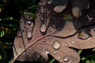 Wet Leaf 2