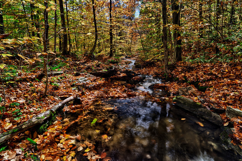 Autumn stream - Belvidere, VT