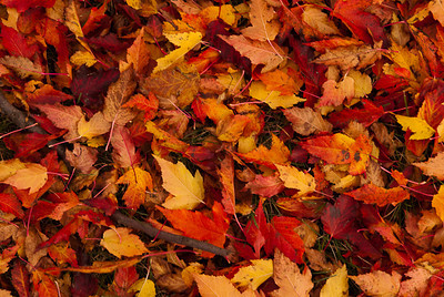 Fall Carpet