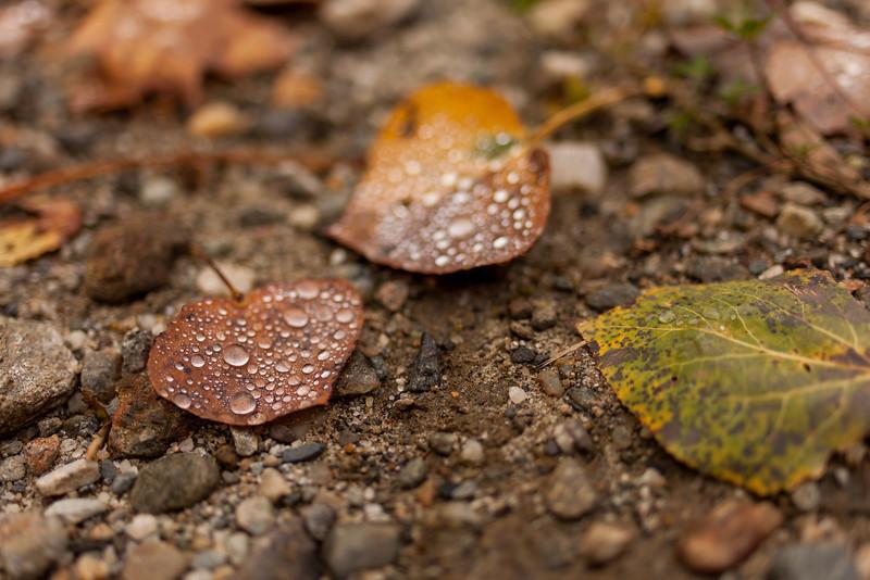 Droplets - Stowe, Vt