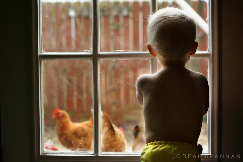 02.13.10 boy meets chicken