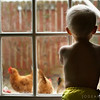 02.13.10 boy meets chicken