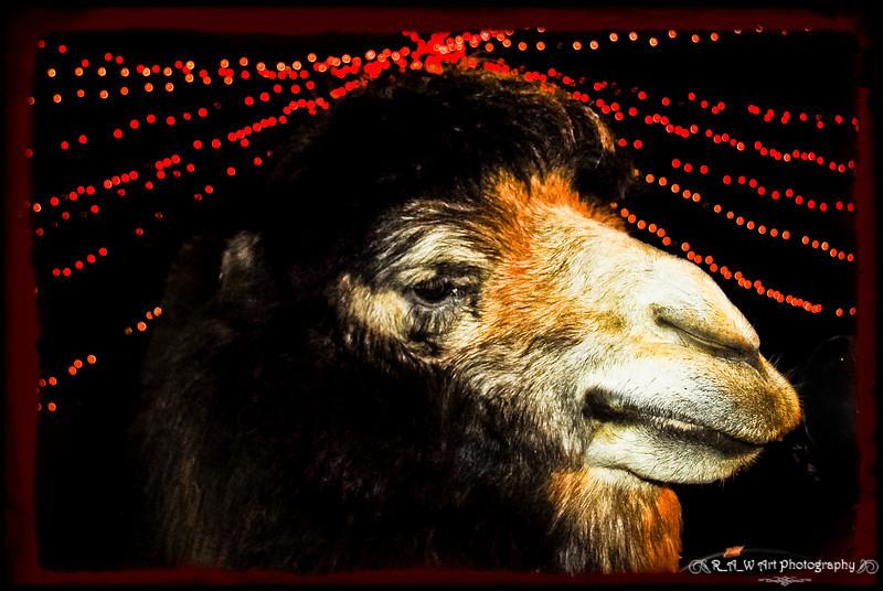Joe Camel-1