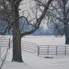 Snow Pasture