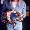 "IM with ""Lucille Ball"", our (then) new Ball Python."