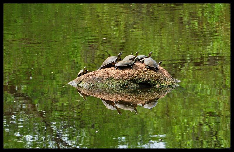 Turtle Gathering