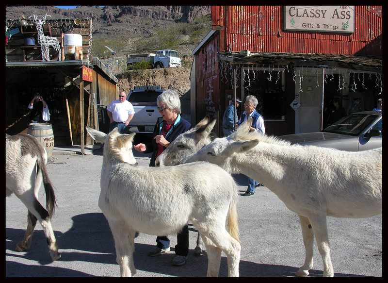 IM feeding Wild Burros in Town - This was encouraged in 2009, but illegal in 2015.