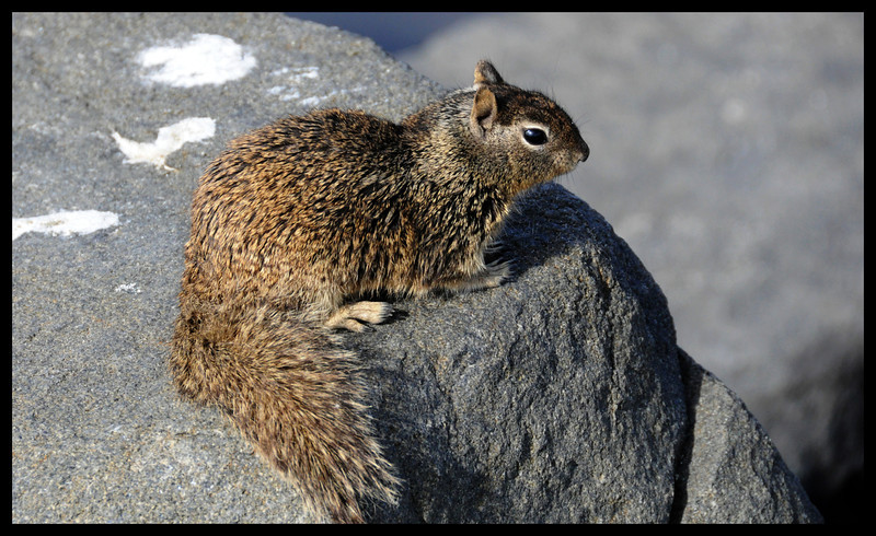 Salt Water Squirrel